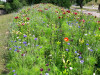 Bepflanzungskonzept zur Remstal Gartenschau 2019: Lilienwiese