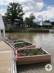 Provisorisch und nur vorübergehend sind die »Schwimmenden Gärten« am Ende des Schwimmstegs angebracht | Foto: Stadt Remseck am Neckar